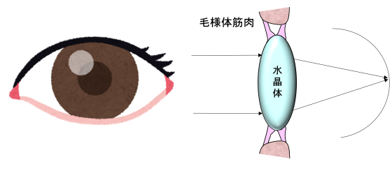 近視・老眼を治す方法